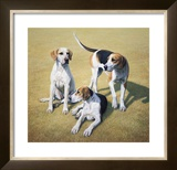 Cotswold Foxhounds Limited Edition Framed Print by Gary Stinton