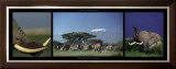 Elephants and Kilimanjaro Prints by Michel & Christine Denis-Huot