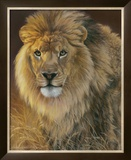 Power and Presence: African Lion Poster by Joni Johnson-godsy
