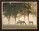 Horses in the Mist Poster by Monte Nagler