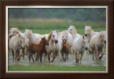 Chevaux de Camargue Posters by Gilles Martin-Raget