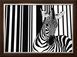 Zebra I Prints by Tim Flach