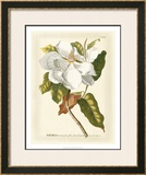 Magnificent Magnolias I Prints by Jacob Trew