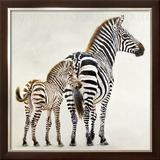 Zebre et Son Petit de Ndutu Print by Danielle Beck