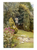 Doves in Godwin King's Garden at Stonelands, Sussex Giclee Print