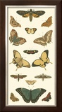 Cramer Butterfly Panel I Prints by Pieter Cramer