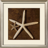 Starfish Print by Caroline Kelly
