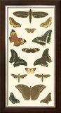 Cramer Butterfly Panel II Posters by Pieter Cramer