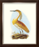 Squated Heron Prints by S Selby