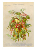 Exotic Flowers Used in Making Perfumes, Including Jasmine, Eucalyptus, Vanilla and Mimosa Giclee Print