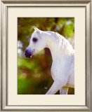 Graceful Beauty Framed Giclee Print by Suzanne Sturgill