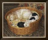Sleeping Dogs Prints by Diana Calvert