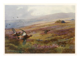 Edward VII Grouse Moor at Balmoral - One of His Favourite Hunting Grounds Giclee Print