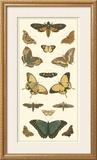 Cramer Butterfly Panel I Print by Pieter Cramer