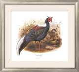 Swinhoe's Pheasant Prints by Wolf & Smit