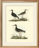 Selby Sandpipers II Posters by John Selby