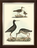 Selby Sandpipers I Prints by John Selby