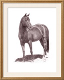 Calypso Pony Framed Giclee Print by Lorrie Beck