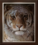 Tiger Portrait Prints by Robert Bateman