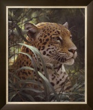 Symbol of the Rainforest Prints by Robert Bateman