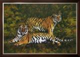 Tigers Prints by Joaquin Moragues