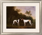 Two Greyhounds in a Landscape Poster by John Boultbee