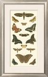 Cramer Butterfly Panel II Print by Pieter Cramer