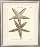 Striking Starfish I Posters