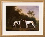 Two Greyhounds in a Landscape Prints by John Boultbee