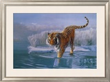 Siberian Tiger Posters by Leonard Pearman