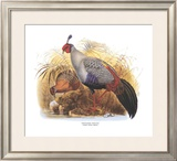 Siamese Crested Fireback Posters by  Wolf & Smit