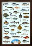 Fish Sea Prints