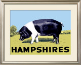 Hampshires Framed Giclee Print