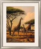Giraffe Family Print by Clive Kay