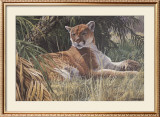 Last Sanctuary- Florida Panther (detail) Print by  Seerey & Lester