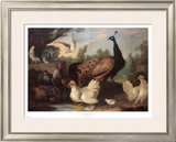 Barnyard with Chickens Art by Melchior d'Hondecoeter