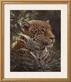 Symbol of the Rainforest Print by Robert Bateman