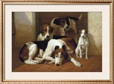 Foxhounds And A Terrier Limited Edition Framed Print by E.a.s. Douglas