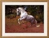 Horse Framed Giclee Print by Sara Stafford