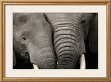 Calin d'Elephants Poster by Michel & Christine Denis-Huot
