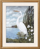 Great White Egret Posters by James Harris