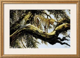Leopard Sentry Prints by Spencer Hodge