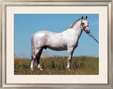 Stand Proud Framed Giclee Print by Sara Stafford