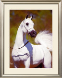 A Vision in White Framed Giclee Print by Suzanne Sturgill