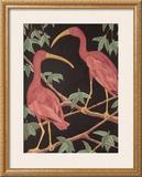 Scarlet Ibis II Posters by Dan Goad