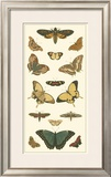 Cramer Butterfly Panel I Art by Pieter Cramer
