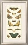 Cramer Butterfly Panel I Art by Pieter Cramer