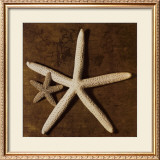 Starfish Art by Caroline Kelly