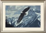 Wings over Winter Prints by Ron Parker