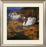 The Swans Family II Print by Spartaco Lombardo